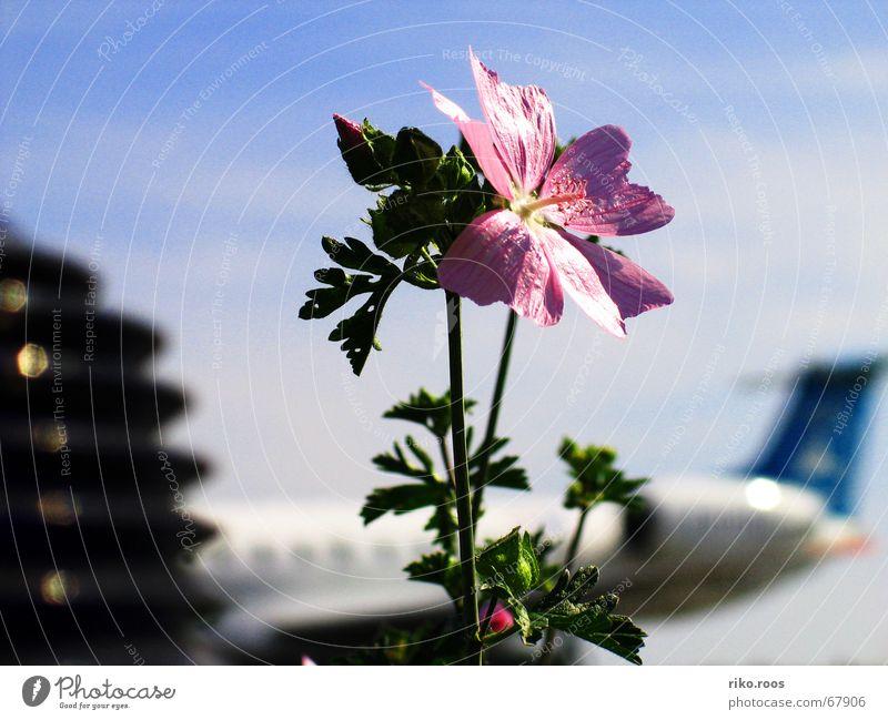 blumiges Flugfeld Rollfeld Flugzeug Abdeckung Blume Landebahn luxair positionslicht flower positionlight