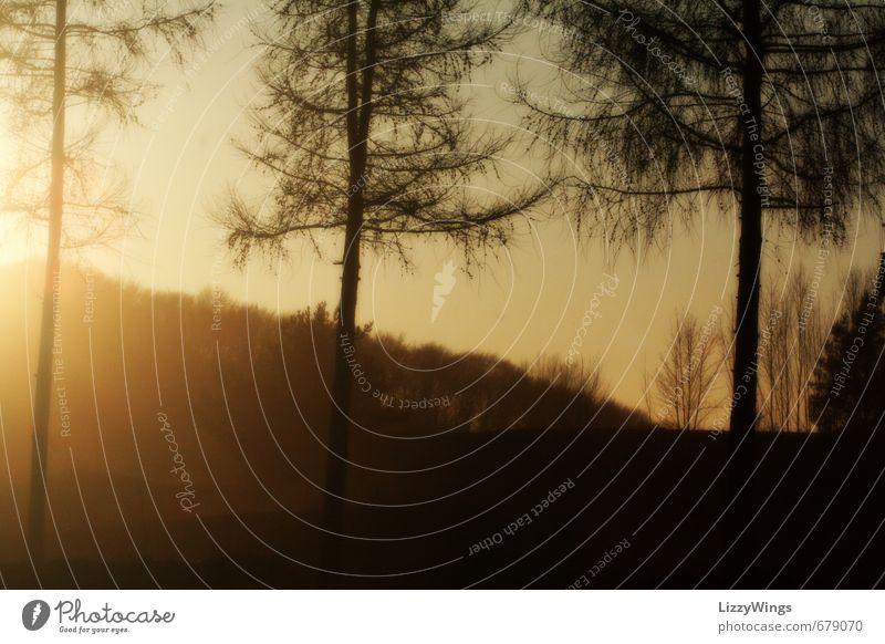 Frühlingssonne Natur schön Sommer Sonne Baum Erholung ruhig schwarz Wald Wärme Gefühle natürlich Stimmung gold authentisch