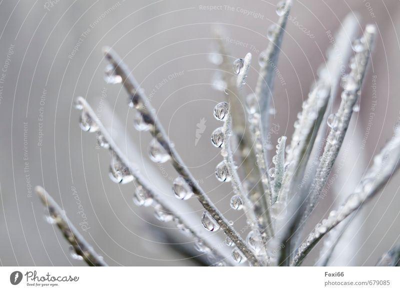 Perlenkette Pflanze Luft Wassertropfen Sommer Sträucher Topfpflanze Garten frisch kalt nass Sauberkeit blau grau weiß Durst Zufriedenheit Natur Umwelt
