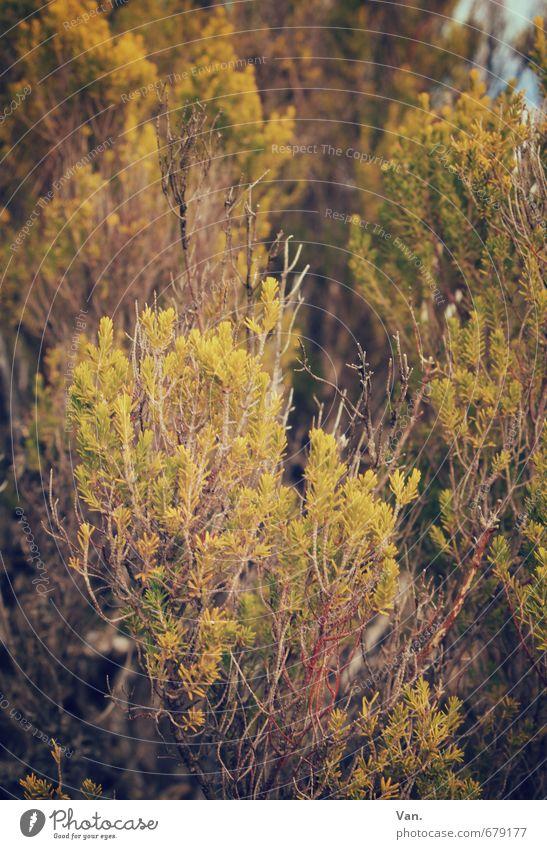 Da ist doch was im Busch² Natur grün Pflanze gelb Herbst Sträucher Wachstum Zweig