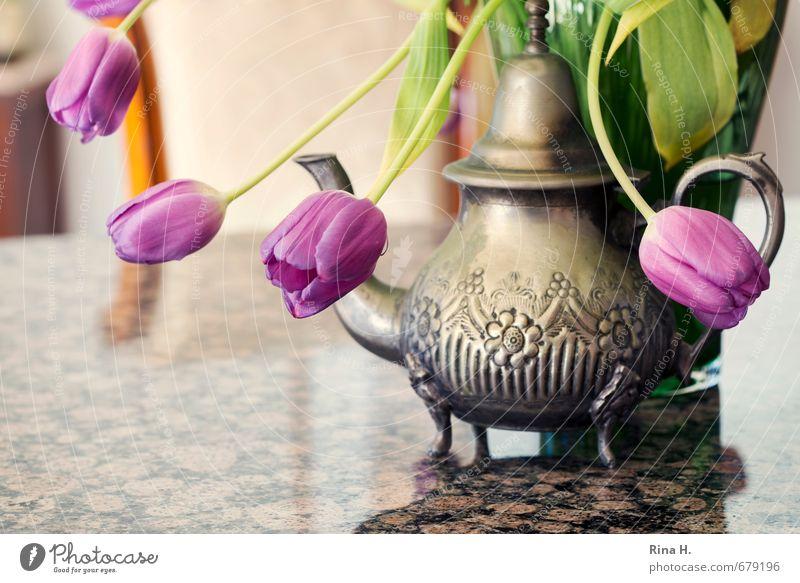 Souvenir Häusliches Leben Innenarchitektur Dekoration & Verzierung Stuhl Tisch Blühend verblüht Tischplatte Granit Teekanne Vase Stillleben Farbfoto