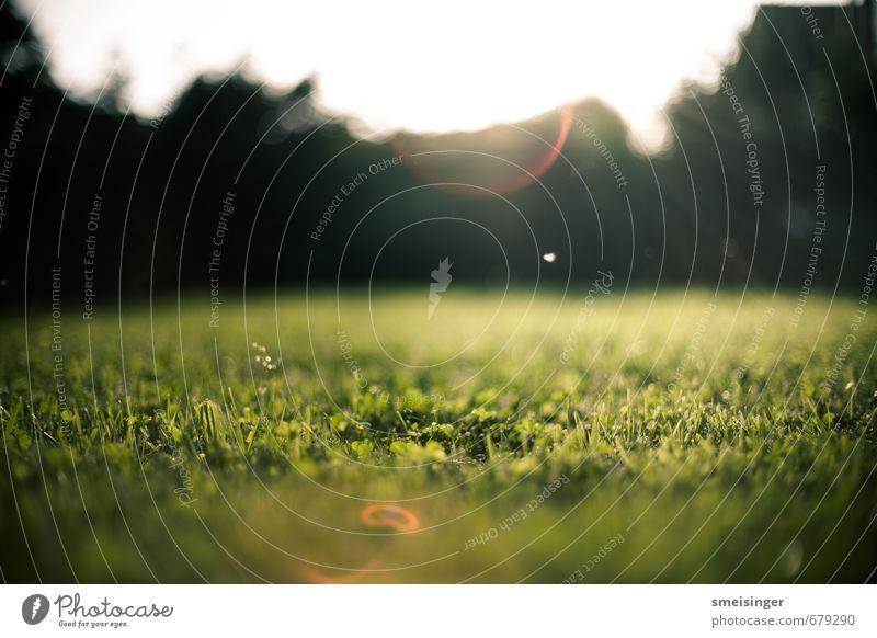 Garten Sonne Natur Gras Sträucher Park weich braun grün Frieden Gelassenheit Idylle Fee Europa Rasen frisch geschnittener Rasen Rasenmähen Farbfoto