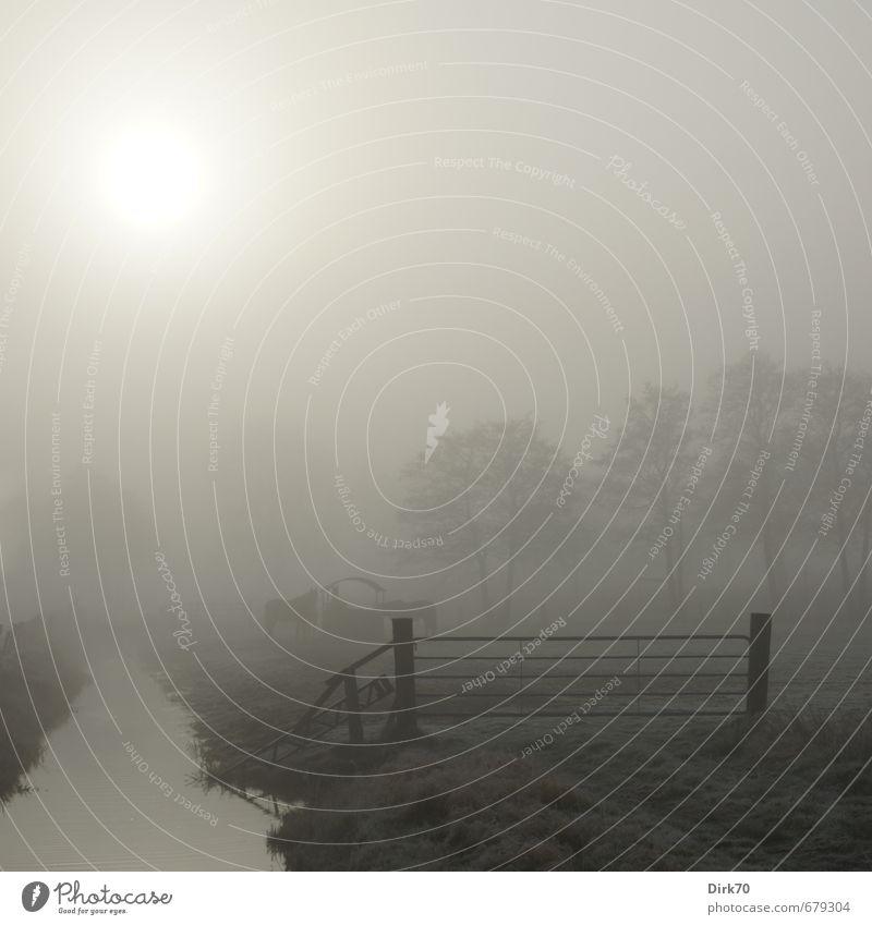 Morgennebel über der Weide Landwirtschaft Forstwirtschaft Umwelt Landschaft Sonne Sonnenlicht Winter Wetter Nebel Baum Gras Wiese Feld Wassergraben Tor