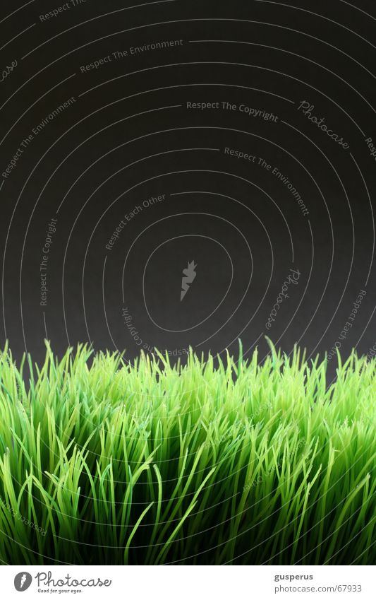 I Grow Up <!> Natur grün Gras hoch Wachstum Halm gestellt Wunder beruhigend Kunstrasen