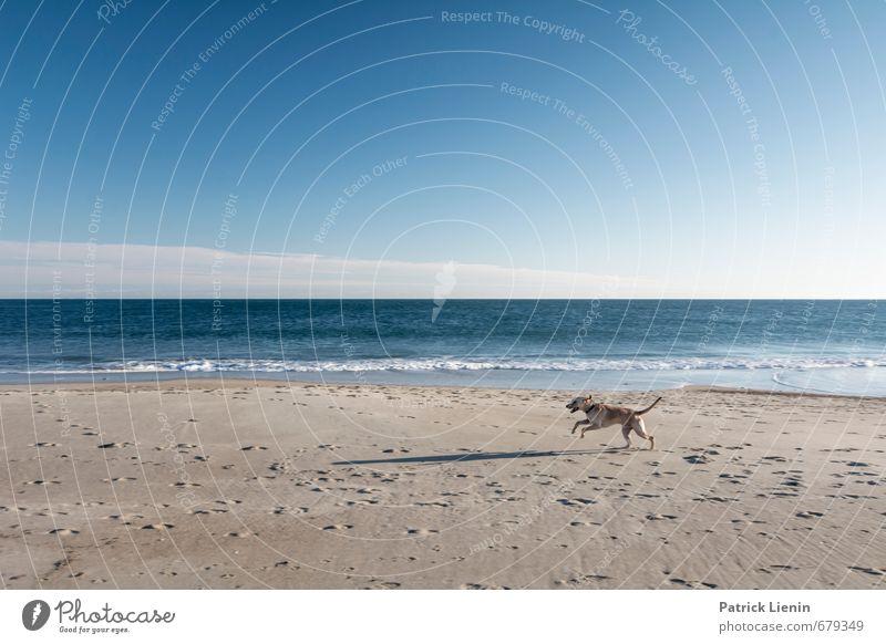 born to run Hund Natur Ferien & Urlaub & Reisen blau Wasser Erholung Landschaft Tier Ferne Strand Umwelt Küste Spielen Freiheit Sand Luft