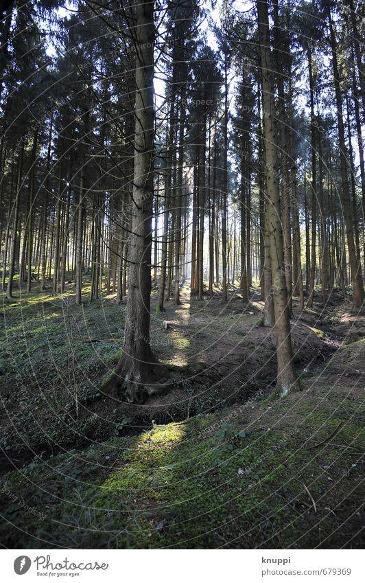Lichtblick Umwelt Natur Pflanze Erde Sonnenlicht Sommer Herbst Schönes Wetter Wärme Baum Moos Wildpflanze Wald Hügel alt dunkel dünn frisch groß kalt trocken