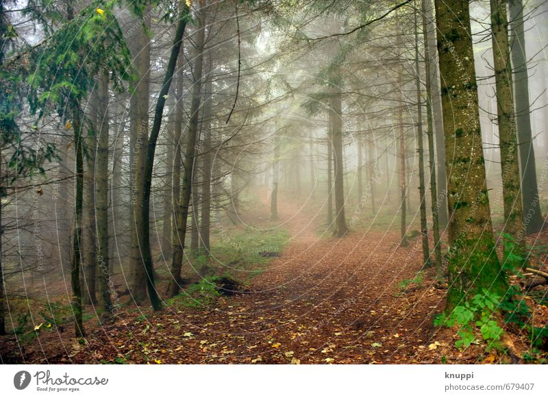 Zauberwald Umwelt Natur Landschaft Pflanze Luft Sonnenaufgang Sonnenuntergang Sonnenlicht Sommer Herbst Schönes Wetter Nebel Baum Sträucher Moos Blatt