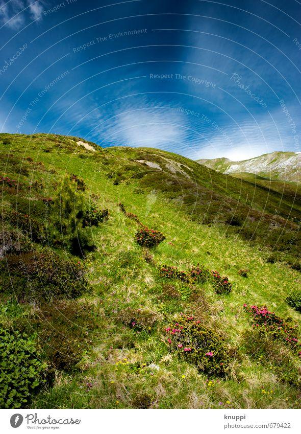 2100 m ü.M. Umwelt Natur Landschaft Pflanze Erde Luft Himmel Wolkenloser Himmel Sonne Sonnenlicht Frühling Sommer Klimawandel Wetter Schönes Wetter Blume Gras