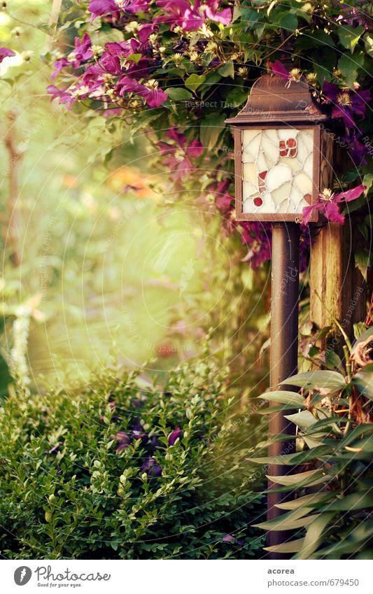 Sommergeheimnis Natur Pflanze Sträucher Blatt Blüte Grünpflanze Garten natürlich braun grün violett friedlich Gelassenheit Erholung Frieden Laterne Farbfoto