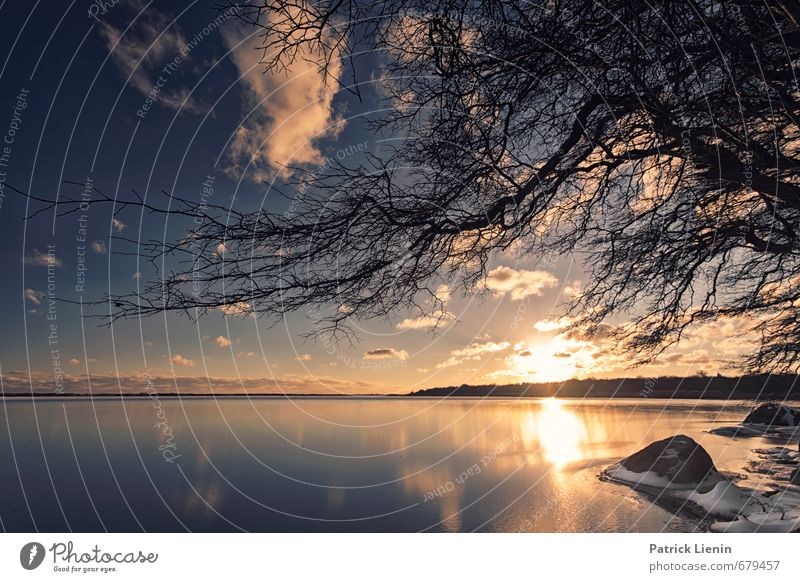 Trustom Pond Umwelt Natur Landschaft Pflanze Urelemente Erde Himmel Sonne Sonnenaufgang Sonnenuntergang Sonnenlicht Wetter Schönes Wetter Baum Küste Seeufer