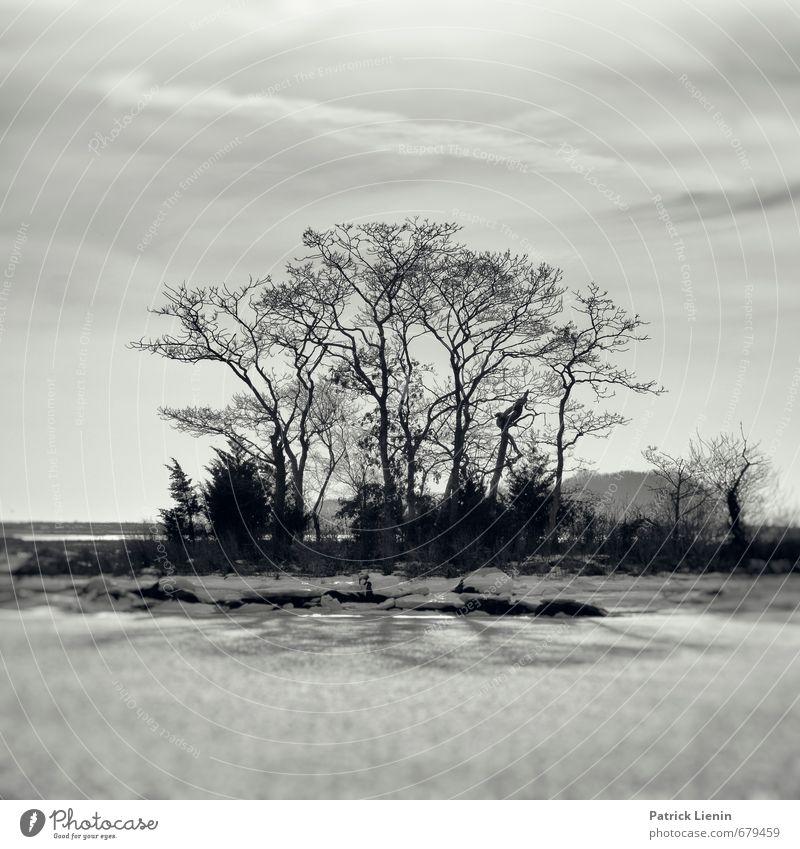 Fake Plastic Trees Himmel Natur Ferien & Urlaub & Reisen Pflanze Baum Einsamkeit Landschaft Wolken kalt Umwelt Schnee elegant Zufriedenheit Perspektive ästhetisch Urelemente