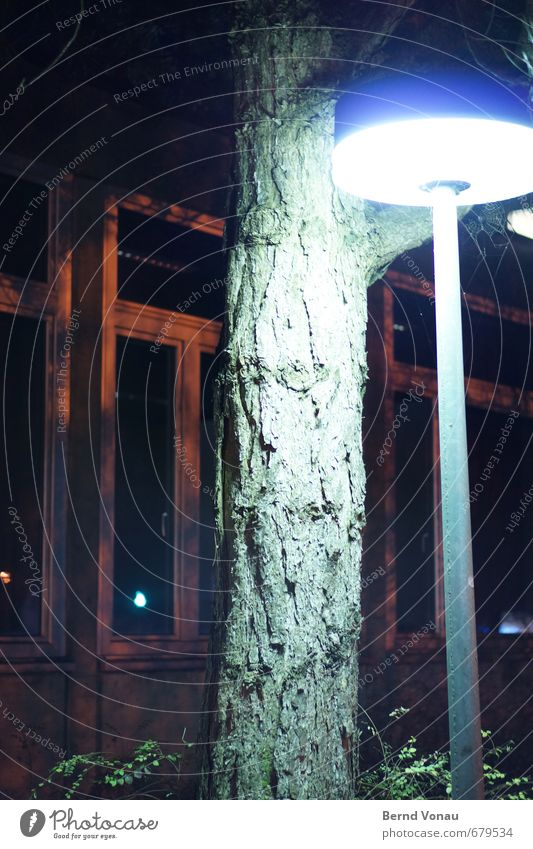 Zwielicht Baum Sträucher Kleinstadt Haus Park Fassade Fenster Wege & Pfade Straßenbeleuchtung blau braun grün orange weiß grell Baumrinde Strukturen & Formen