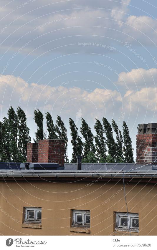 Wilhelmsburger Wind Energiewirtschaft Umwelt Natur Luft Himmel Wolken Klima Wetter Baum Hamburg-Wilhelmsburg Stadt Menschenleer Haus Mauer Wand Fassade Dach