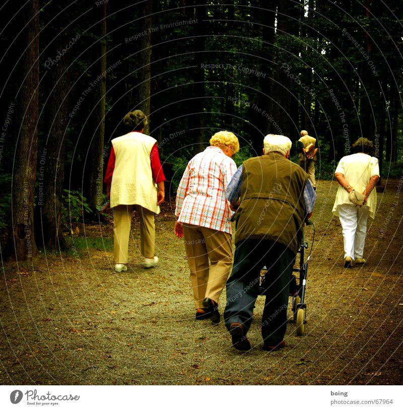 Mittwochs gehen wir immer Enten füttern Senior Herbst Menschengruppe warten Ausflug Spaziergang Vergänglichkeit Weiblicher Senior Männlicher Senior Spazierweg