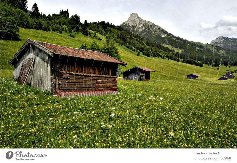 Hütten-Tour I Blume grün Sommer Ferien & Urlaub & Reisen ruhig Wolken Wald Erholung Wiese Berge u. Gebirge Wetter Gipfel Blumenwiese