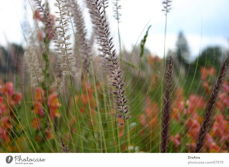 Sommerwiese Gras Blume mehrfarbig Blumenwiese Duft rosa rot grün Natur Himmel Pflanze August Idylle orange Wärme flowers plants sky red warmth