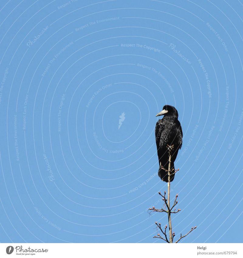 Wachposten... Natur blau Pflanze Baum Einsamkeit Tier schwarz Umwelt Leben Frühling Freiheit natürlich braun Vogel Zufriedenheit sitzen