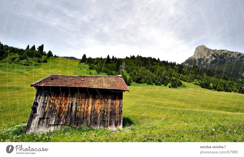 Hütten-Tour II Blume grün Sommer Ferien & Urlaub & Reisen ruhig Wolken Wald Erholung Wiese Berge u. Gebirge Wetter Gipfel Blumenwiese