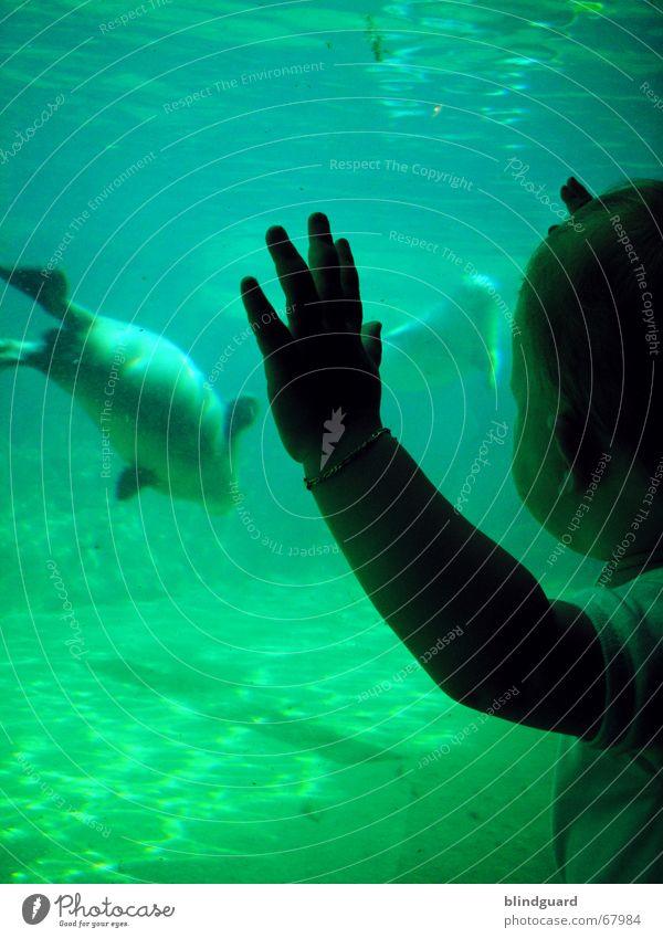 Sophies (Unterwasser-)Welt [2] Kind Wasser Sonne Freude Tier Wellen Schwimmen & Baden stehen beobachten tauchen Zoo Kleinkind Frankfurt am Main Fensterscheibe