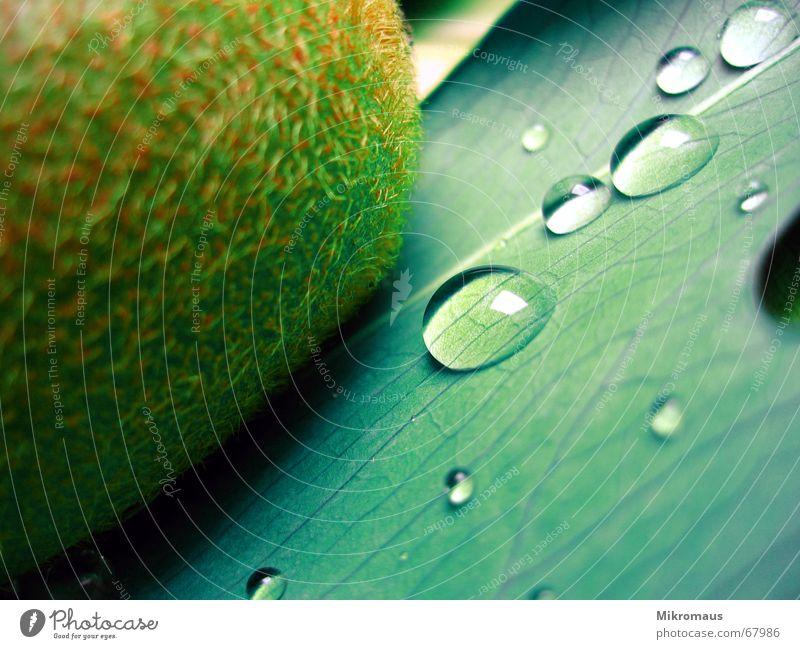 das vorletzte Kiwi Frucht Ernährung Wellness Gesundheit Wassertropfen Tropfen Tränen Trinkwasser Regen nass grün Pflanze Blattadern Gefäße Lebensmittel