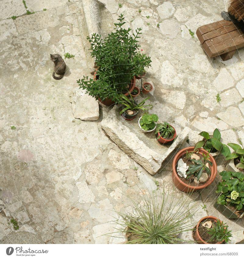 katze neben pflanzen in töpfen Katze Hinterhof Vogelperspektive Blume Ferien & Urlaub & Reisen Erholung Sommer Pflanze Bank Garten cat flowers sitzen sun