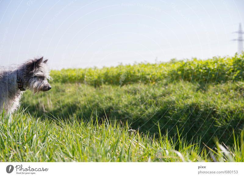 (s)chiller | ich sehe was was du nicht siehst Hund Natur blau grün Pflanze Sonne Tier Wiese Gras grau Feld warten stehen Schönes Wetter Ausflug beobachten