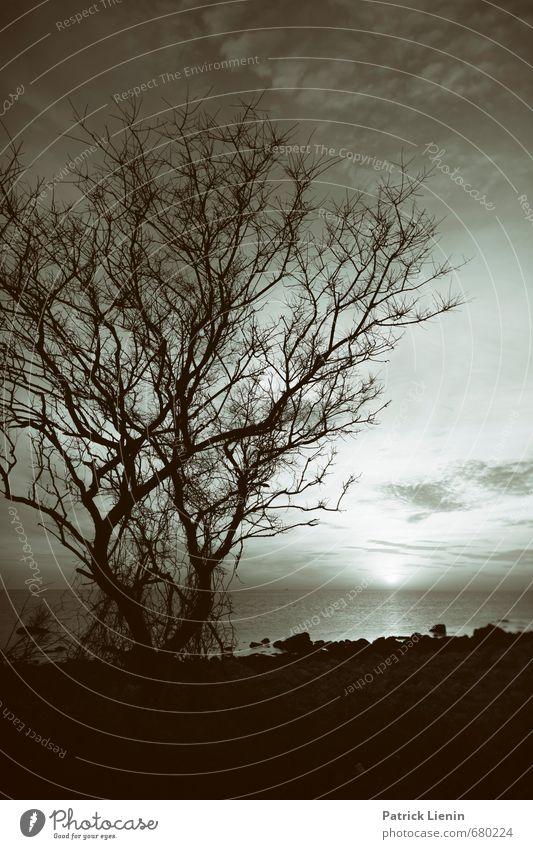 Weitwelt Umwelt Natur Landschaft Urelemente Erde Himmel Wolken Sonne Sonnenaufgang Sonnenuntergang Sonnenlicht Sommer Klima Schönes Wetter Pflanze Baum Wellen