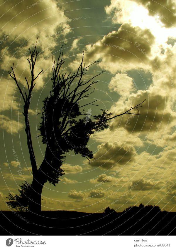Himmel im pc-style Baum Wolken dunkel Tod Traurigkeit Trauer Symbiose