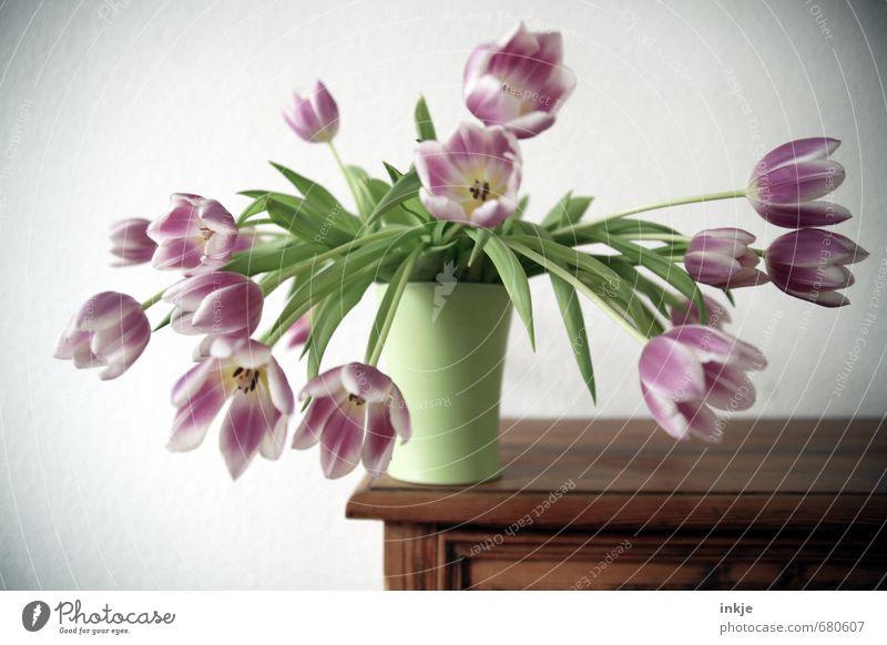 ohne Kindersicherung Lifestyle Stil Freizeit & Hobby Häusliches Leben Dekoration & Verzierung Kommode Blume Tulpe Blumenstrauß Vase Blühend hängen schön grün