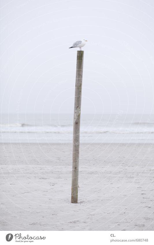 möwe Ferien & Urlaub & Reisen Tourismus Freiheit Strand Meer Insel Wellen Umwelt Natur Landschaft Sand Himmel Wolken Küste Nordsee Tier Wildtier Vogel Flügel