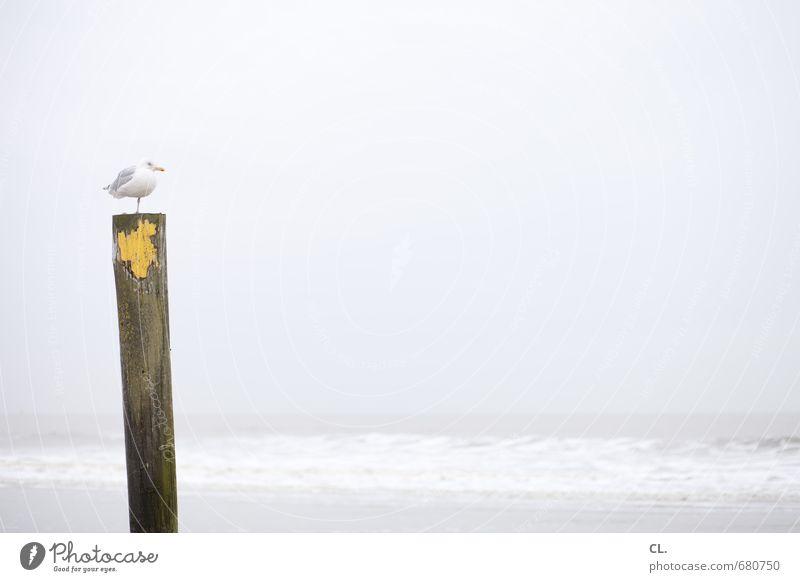 meerblick Ferien & Urlaub & Reisen Tourismus Ferne Freiheit Strand Meer Insel Wellen Umwelt Natur Landschaft Wasser Himmel Wolken schlechtes Wetter Küste