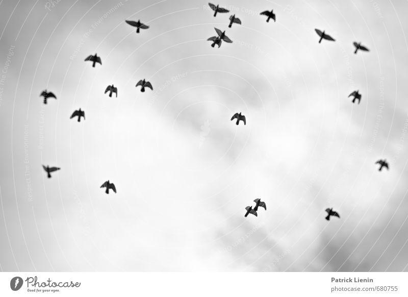 Keep Moving Himmel Natur Wolken Tier Umwelt fliegen Vogel Zusammensein elegant Kraft trist Wildtier mehrere Kreativität Tiergruppe Flügel