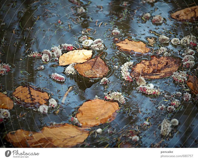 jahreszeiten Natur blau Wasser Pflanze rot Blatt dunkel kalt Umwelt Wärme Herbst Frühling Blüte See braun orange