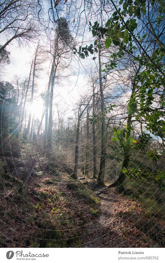 Wanderwald Natur Ferien & Urlaub & Reisen Pflanze Sonne Baum Erholung Landschaft ruhig Wald Umwelt Wärme Frühling Freiheit Wetter Zufriedenheit Schönes Wetter