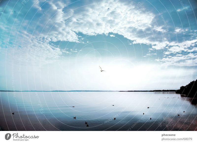 Towards The Sun Chiemsee Chiemgau Bayern See Wolken Horizont Vogel Möwe Sonnenaufgang Licht Himmel raststätte chiemsee Landschaft Ente blau Freiheit Beleuchtung
