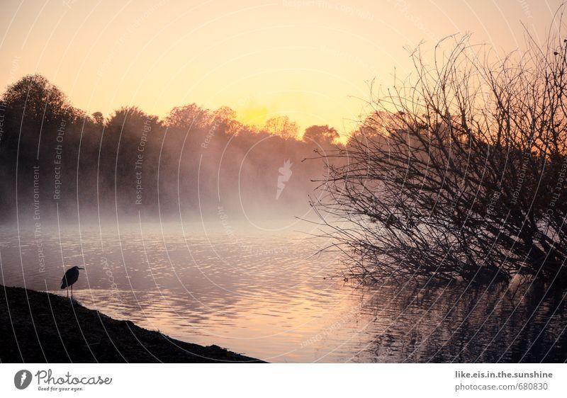 angler- glück. Natur Wasser Baum Meer Einsamkeit Landschaft ruhig kalt Wald Umwelt Herbst Küste See Vogel Nebel Klima