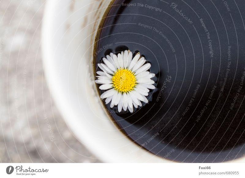 Fehl am Platz Lebensmittel Kaffeetrinken Getränk Heißgetränk Tasse Becher Gänseblümchen Kaffebecher Zeichen Blümchenkaffee beobachten Erholung genießen verblüht