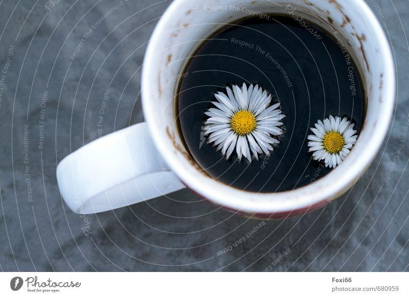 Blümchenkaffee Getränk Kaffee Kaffeesatz schwarzer Kaffee Tasse Topf Glas Porzellan Steingut genießen trinken Duft Gesundheit heiß gelb weiß Fröhlichkeit