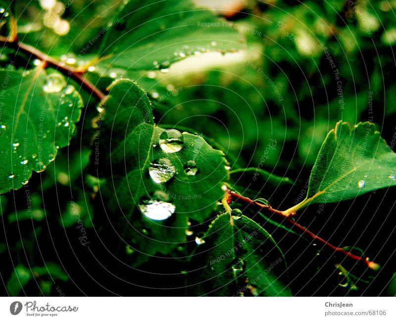Titellos schön Wellness Erholung ruhig Zoo Natur Wasser Wassertropfen Urwald träumen nass grün beads water drip sheet sheets dream wet wetness mehrfarbig Morgen