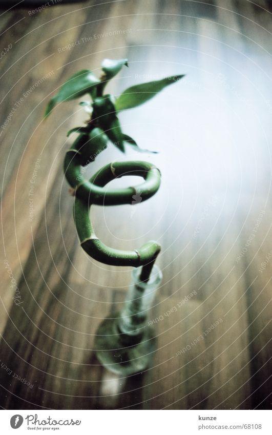 mein Stängel Asien gedreht Holz Holzbrett Vase Stengel frisch Licht grün braun analog Bambusrohr Schnecke Glas Wasser Scan