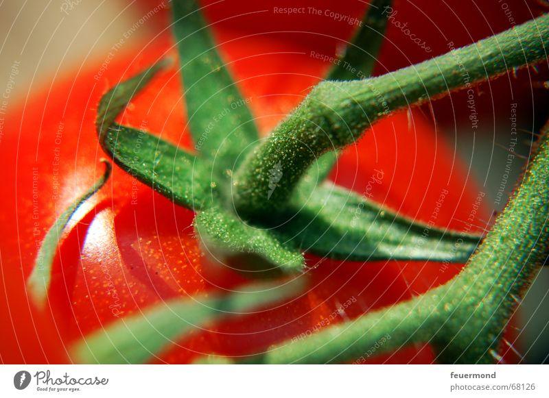 To·ma·te Garten frisch Ernährung süß Kochen & Garen & Backen Gemüse Appetit & Hunger Restaurant Markt Tomate saftig Speisesaal Händler Saal Gemüsehändler