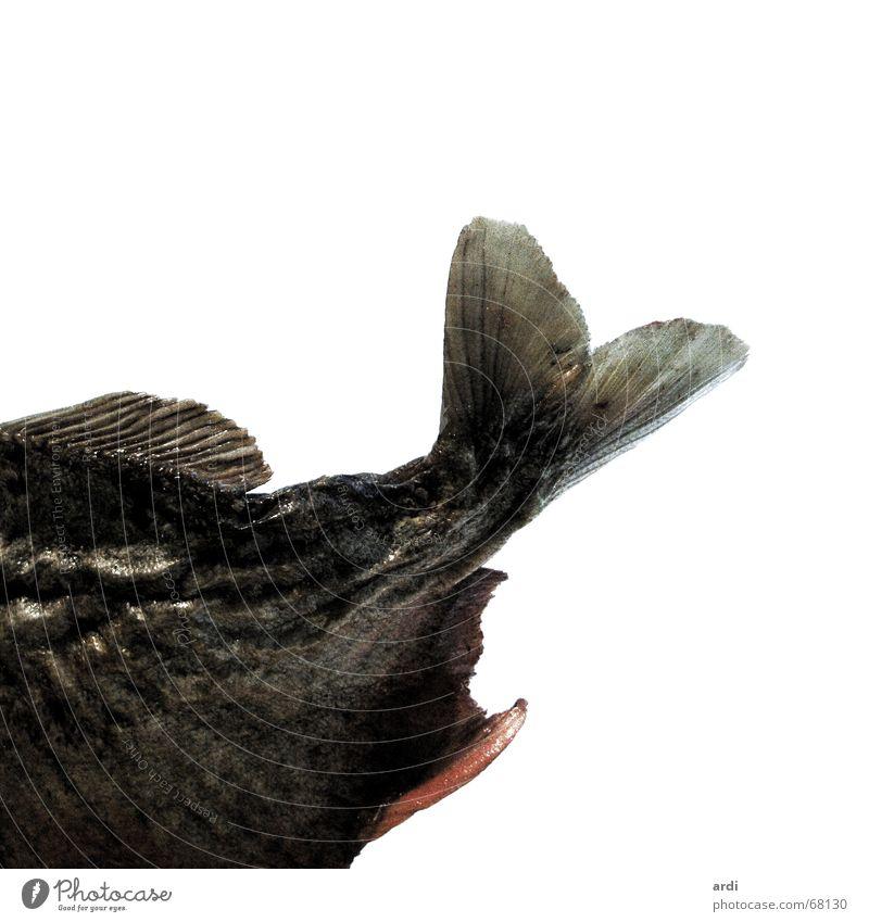 P-iranha Tier Fisch Schwanz Schwimmhilfe Kopfschuppe Piranha Schwanzflosse