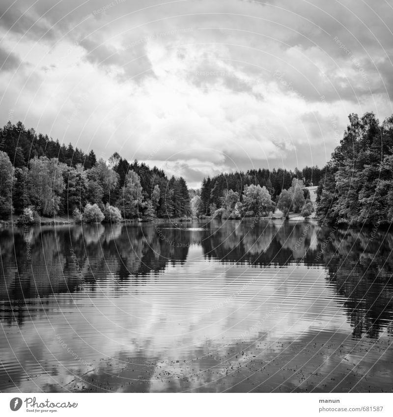 q in sw Landschaft Wasser Himmel Wolken Wetter Wald Seeufer Idylle Schwarzweißfoto Außenaufnahme Menschenleer Tag Licht Schatten Kontrast Starke Tiefenschärfe