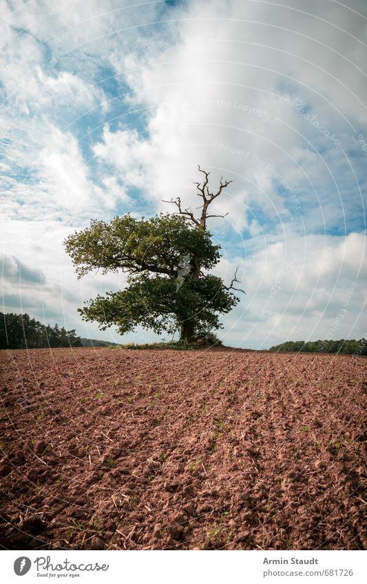 Tausenjährige Eiche auf einem Acker Himmel Natur blau alt Baum Landschaft Ferne dunkel Frühling natürlich braun Stimmung Feld Erde Kraft Wind