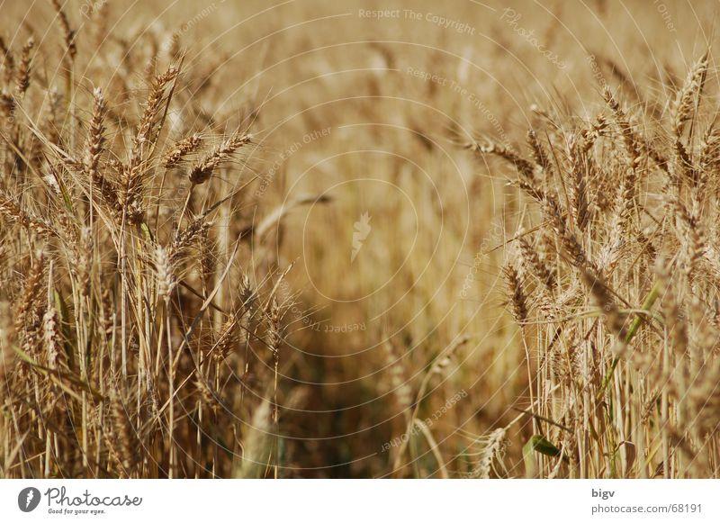 lücke gelb Wege & Pfade leer Getreide Korn Lücke unbeständig