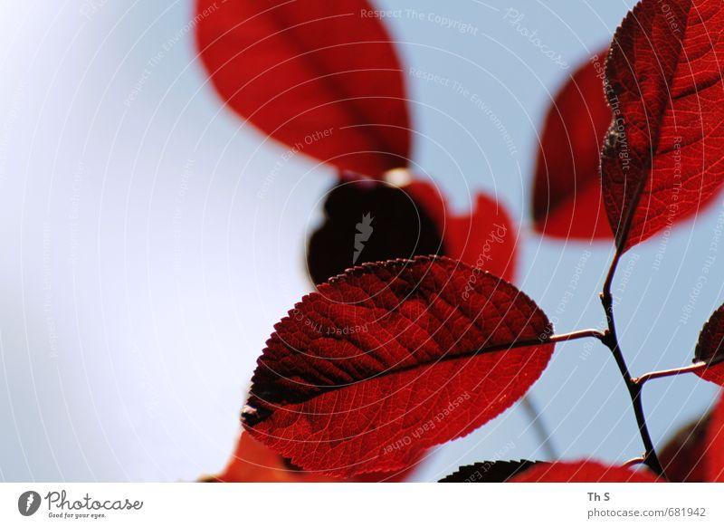 Blatt Natur blau schön Farbe Pflanze rot Umwelt Leben Freiheit Glück natürlich elegant Zufriedenheit Design Wachstum