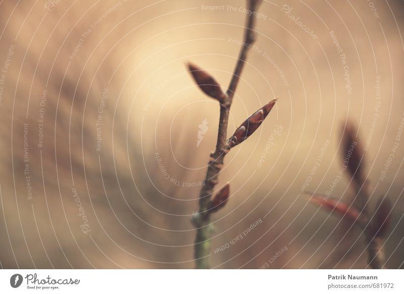 Der Frühling kommt Umwelt Natur Pflanze Klima Schönes Wetter Blüte Wildpflanze Wald atmen berühren Blühend Erholung leuchten träumen Duft dünn frisch saftig