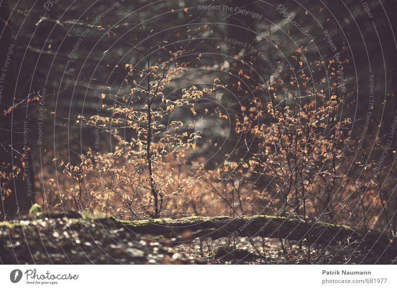 Buschbrand Natur alt Baum Erholung Blatt dunkel Wald Bewegung Frühling Holz Gesundheit glänzend leuchten Sträucher Schönes Wetter Blühend