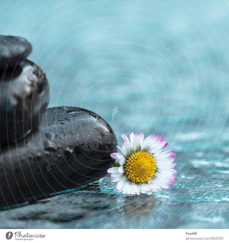 Wellnesstag Gesundheit Leben harmonisch Wohlgefühl Sinnesorgane ruhig Duft Spa Wasser Frühling Gänseblümchen Stein Hot Stone Massagesteine Basalt Erholung
