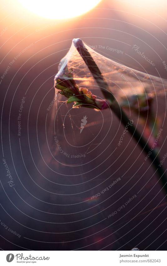 Im Netz Natur Pflanze Sonne Sonnenlicht Sträucher Rose ästhetisch Zufriedenheit ruhig elegant Perspektive Umwelt Farbfoto Außenaufnahme Detailaufnahme